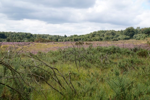 Chobham Common National Nature Reserve