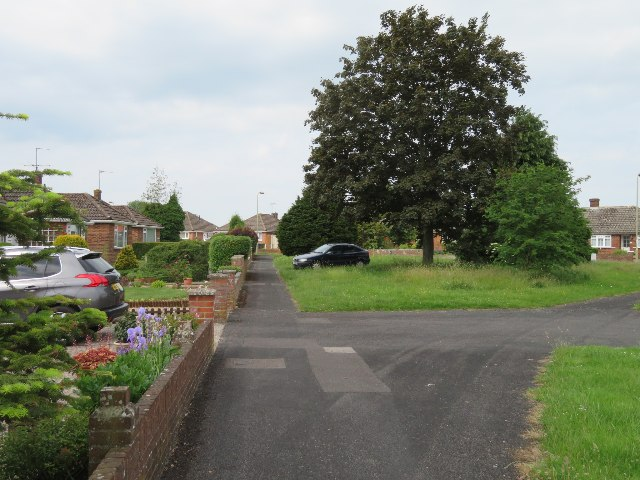 Lone tree - Widmore Road