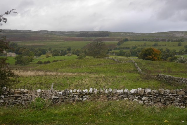 Thistly pasture in Wensleydale