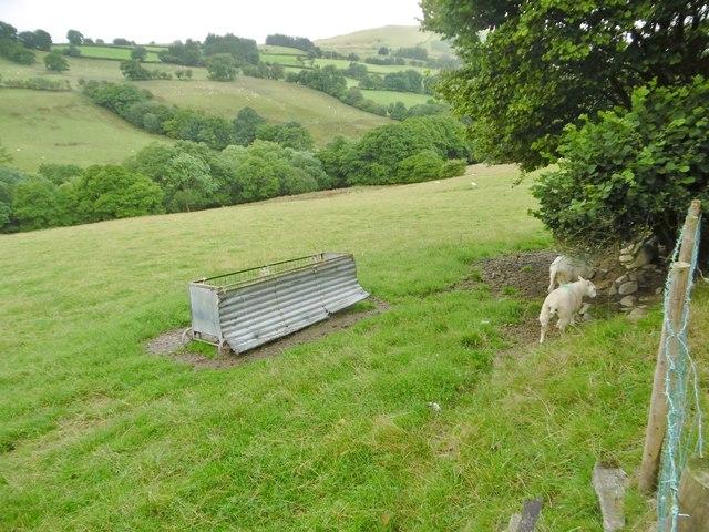 Cefn-coch, sheep grazing