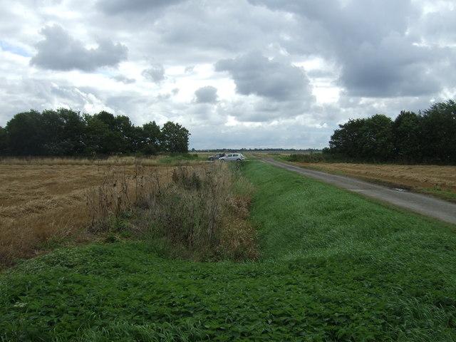 Overgrown drain beside Lambs Hill Drove