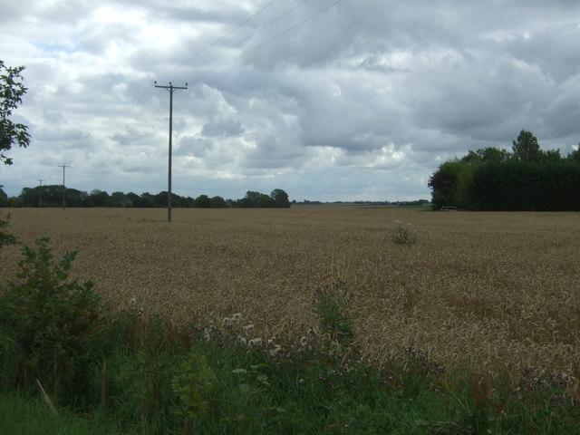 Cereal crop, Eastwood End