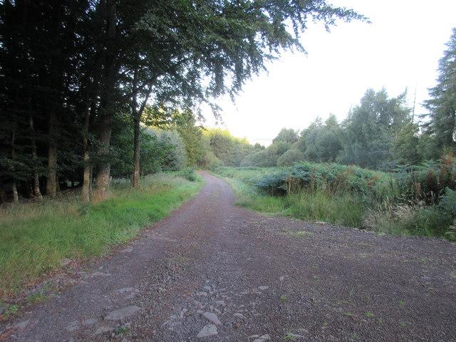 Fothringham Hill Track