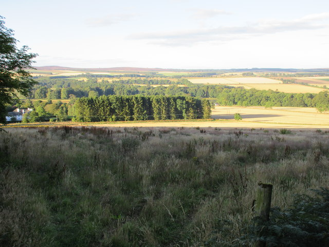 South side of Fotheringham Hill