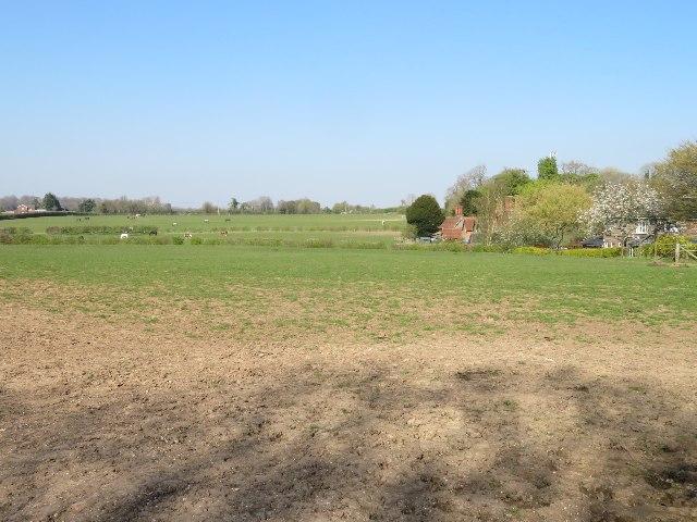 Pony paddocks west of Oakley