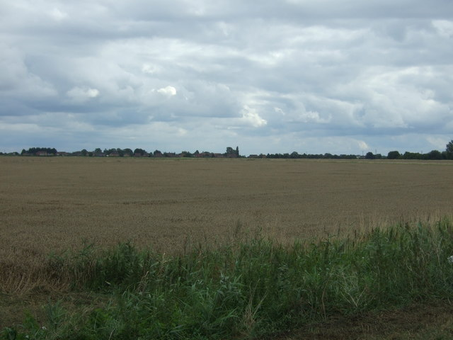 Crop field, Wimblington Fen