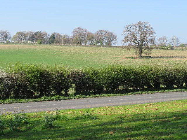 Fields by the Andover Road