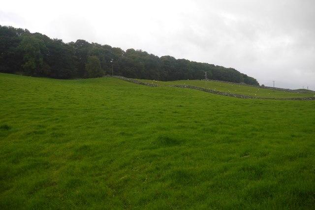 Fields outside Bainbridge