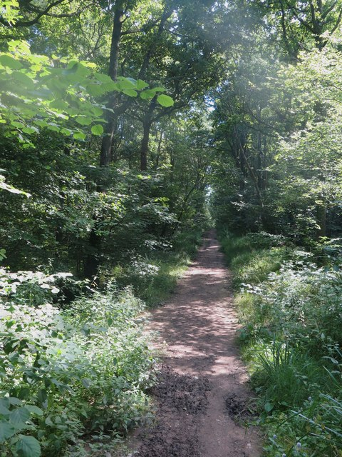 Combley Great Wood, Isle of Wight