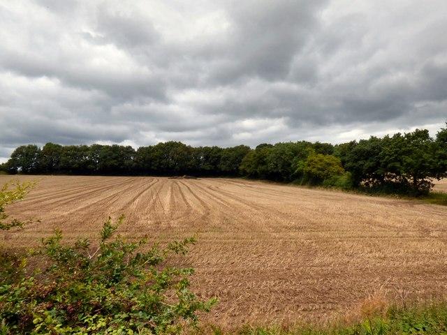 A harvested cornfield