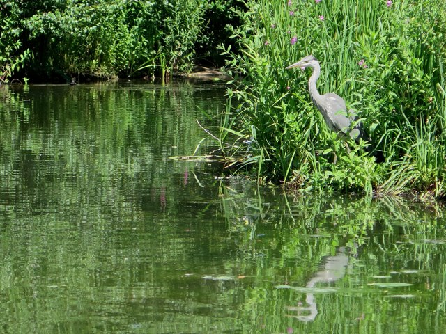 Peg's Pond, Isabella Plantation, Richmond Park