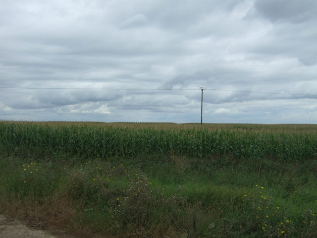 Maize crop off Day's Lode Road