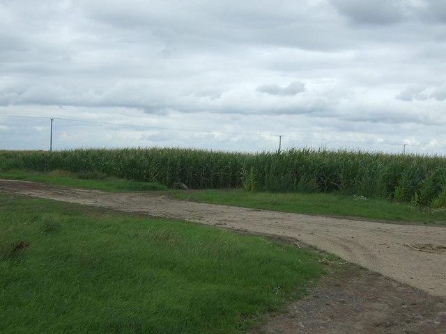 Track and maize crop, Elm Grove Farm