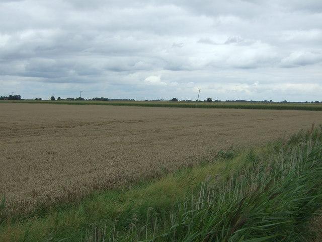 Cereal crop, Cranmore Lots