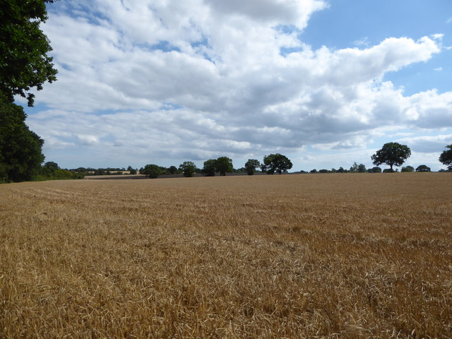 View across the fields from Tabie's Wood