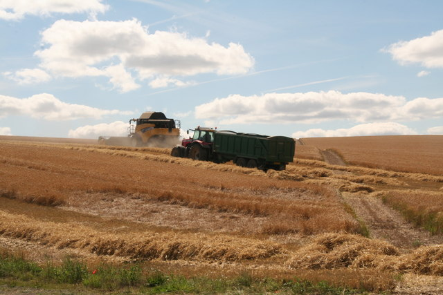 Combining the wheat south of Maidenwell