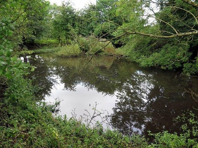 Fish pond near Abbey Wall