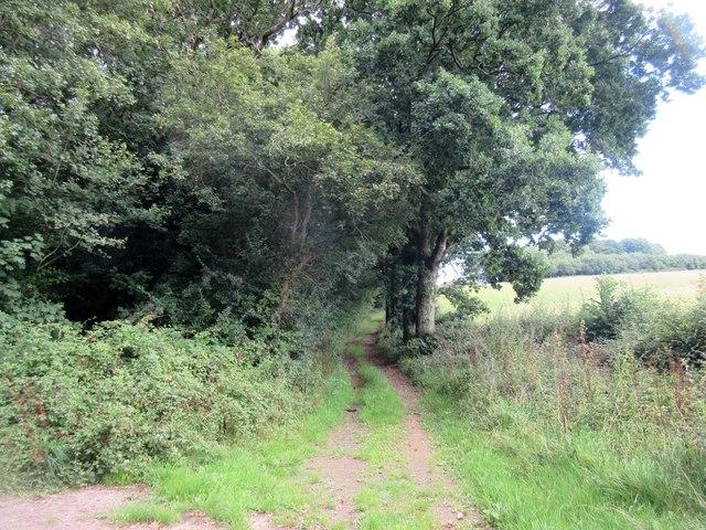 Oak trees by track