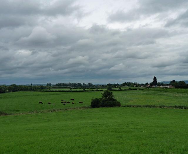 Farmland, Athelney (1)