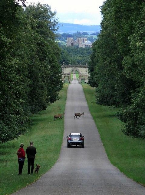 Drive, Studley Park