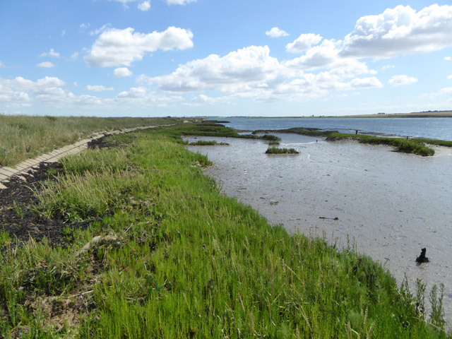 Seawall and a bit of saltings, Longpole Reach, River Crouch