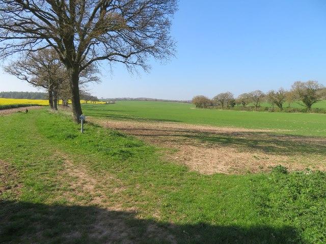 Fields by Blandy's Farm