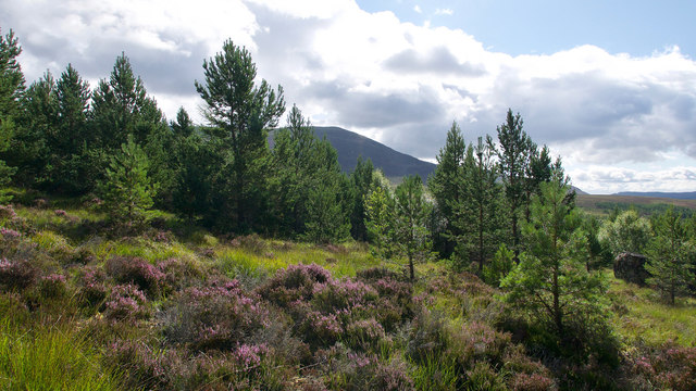 Open woodland above Strath Rusdale