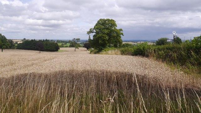 Wheat, Upper Cockshutt