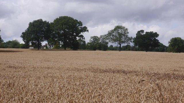 Amalgamated field