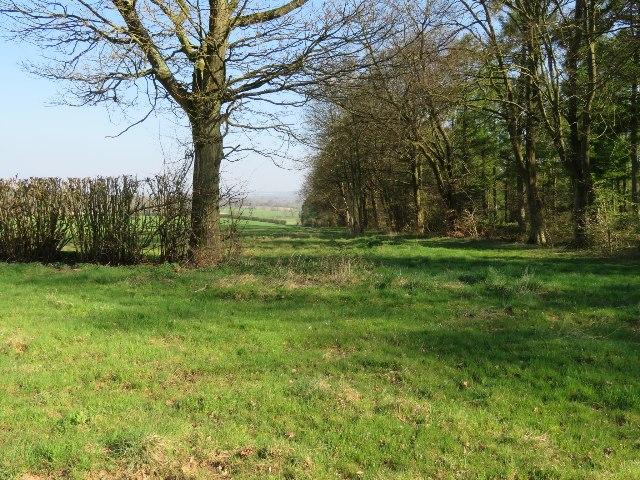 Field boundary - Great Deane Wood