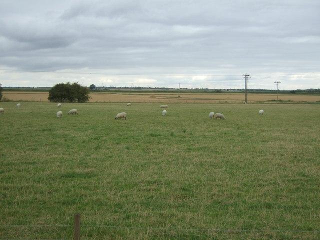 Grazing near Horseway Farm