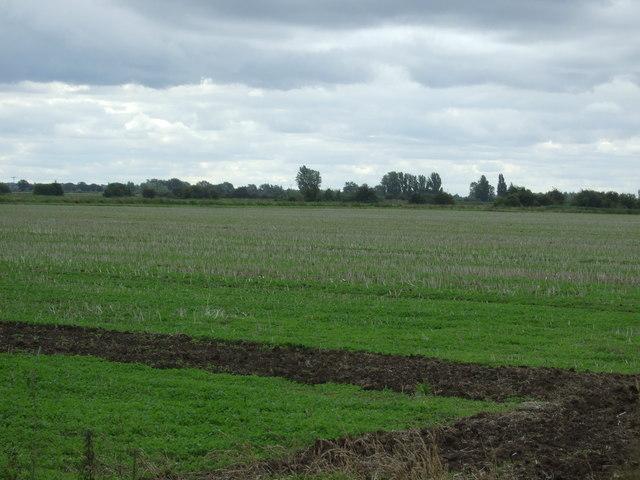 Field, Langwood Fen