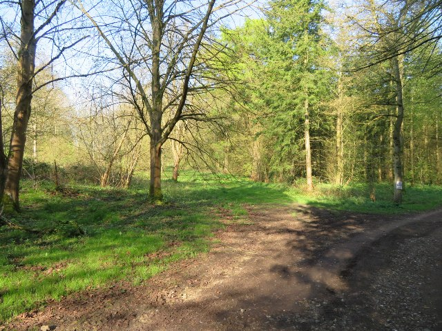 Malshanger estate woodland