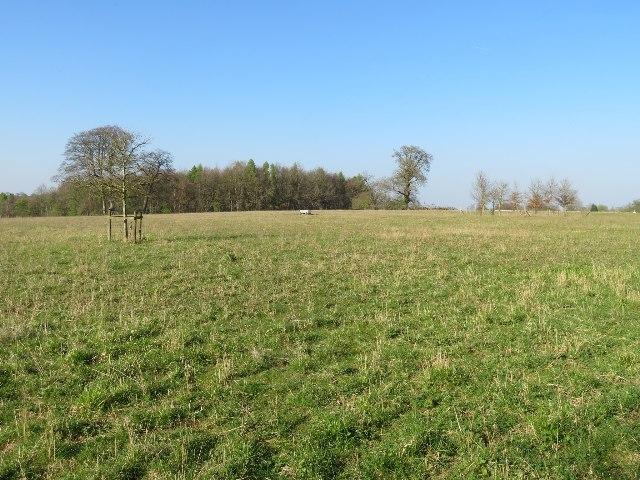 Field in Tangier Park