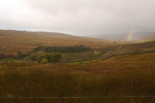 Rough grazing above Nethergill