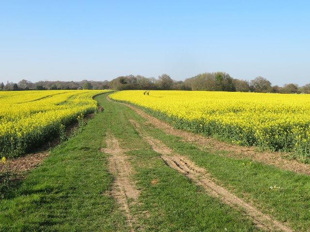 Byway through Roundgrove Field (36.5 acres)
