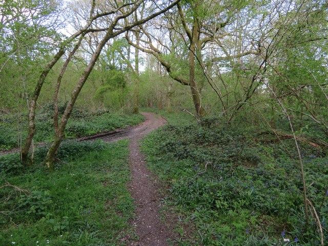 Path into Warren Bottom Copse