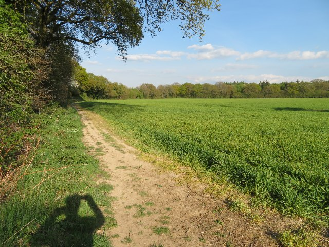 View towards Small's Copse