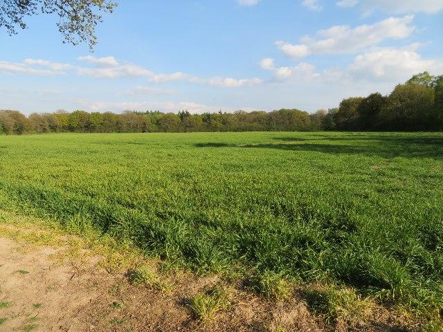 Copse Ground Field (10 acres)