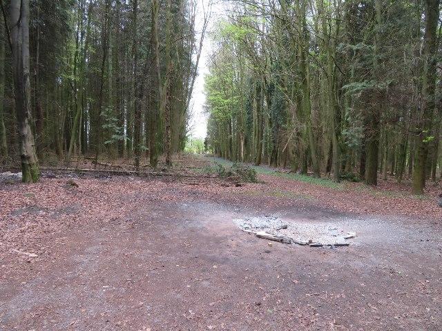 Itchen Row woodland