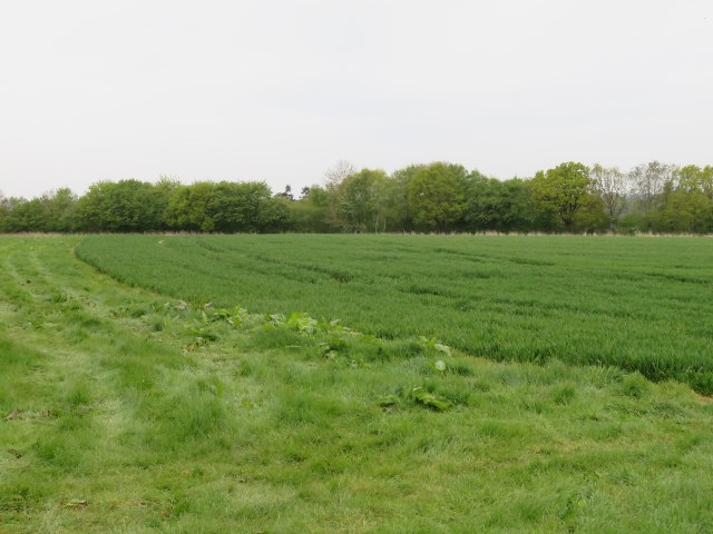 Field east of Itchen Row