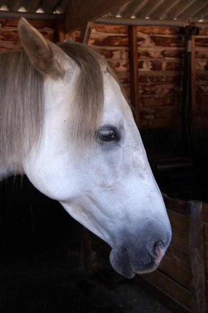 A horse at Bocketts Farm, Fetcham