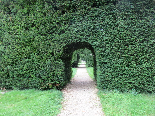 Yew arches