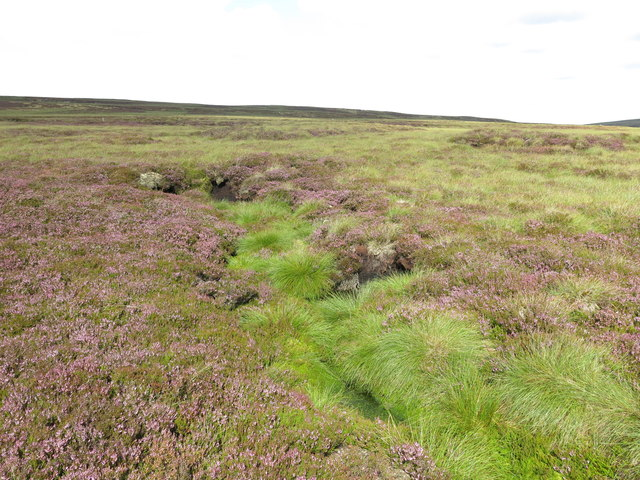 Puddingthorn Moor below Stangend Rigg