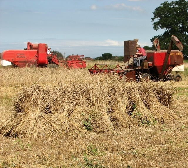 Harvesting in bygone days - two combines at work