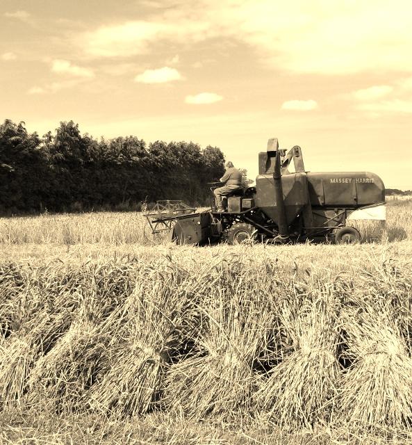 Harvesting in the 1950s