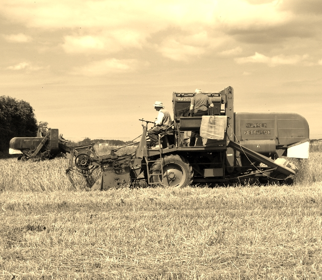 1950s harvesting with a combine