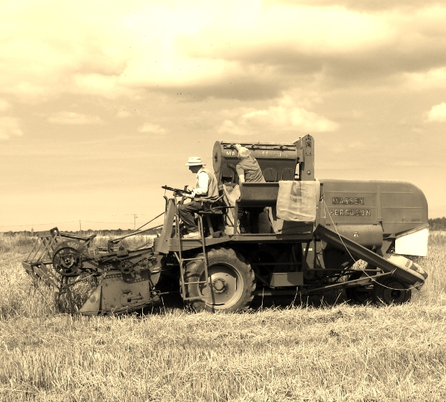 Harvesting with a combine in the 1950s