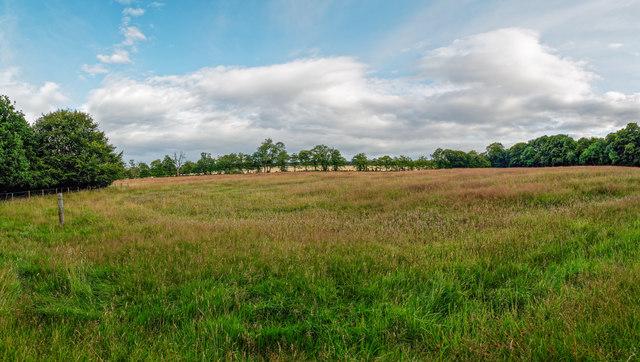 Grass meadow above the Ballycherry Burn