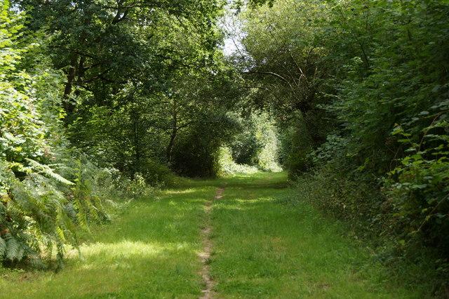 Bridleway along the edge of Epsom Common